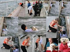 The story of a picture...the rescue of one dog.