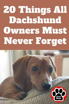 20 Things All Dachshund Owners Must Never Forget. The Last One Brought Me To Tears… These 20 important reminders should serve you well as awesome dachshund owners… Dachshund Facts, Dachshund Funny, Dapple Dachshund, Long Haired Dachshund, Dachshund Puppies, Dachshund Love, Corgi Dog, Pet Dogs, Chihuahua Dogs