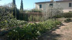Studio Bellesi Giuntoli - Hillside garden
