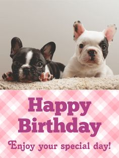 Send Free Happy Birthday Cards to Loved Ones on Birthday & Greeting Cards by Davia. It's free, and you also can use your own customized birthday calendar and birthday reminders. Happy Birthday French Bulldog, Happy Birthday Puppy, Birthday Wishes For Him, Happy Birthday Messages, Happy Birthday Images, Happy Birthday Greetings, Birthday Greeting Cards, Happy Puppy, Card Birthday