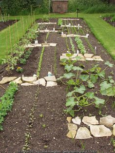 Student vegetable plot, Kew Gardens © David Hawgood :: Geograph Britain and Ireland