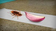 A nadie le gusta tener una plaga invadiéndole la casa. Tener que soportar la presencia de cucarachas y otros insectos en nuestro hogar es una tortura y una situación bastante desagradable.