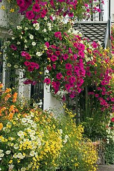 Hanging Baskets and Window Boxes.