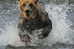 action photographs from action cameras - Google Search