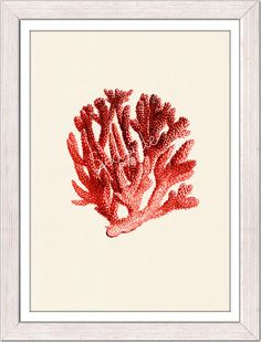 Red coral no06  sea life print free shipping by seasideprints, $12.00