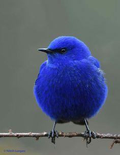 Beautiful Creatures, Animals Beautiful, Cute Animals, Cute Birds, Pretty Birds, Exotic Birds, Colorful Birds, Most Beautiful Birds, Beautiful Flowers