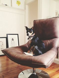 "Spotted! Y'all are reading Desire to Inspire, right?? If not, get on that! In addition to all their regular interior design eye candy, they have a weekly feature called ""Monday's Pets on Furniture"", where they feature, well, pets on furniture."