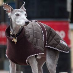 Quilted Fleece Dog Coat worn by Bruno - this is his favourite coat, it keeps his tummy warm too, and is great for whippet walks - www.redhoundfordogs.com