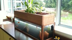 Aquaponics System Detailed Information