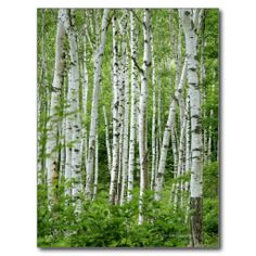 Decorate with popular wall murals from our Birch Trees category. We always offer high quality wall murals and fast and free US shipping. Birch Tree Mural, Birch Tree Wallpaper, Tree Wall Murals, Birch Trees, Aspen Trees, Perfect Wallpaper, Photo Wallpaper, Wall Wallpaper, Custom Wallpaper