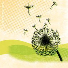 Dandelion Fluff (8x10 matted)