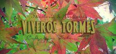 Cartel otoño III