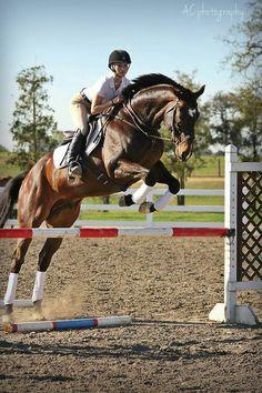 Marvelous horse