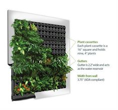 Create a vertical garden with Ambius' green wall panels, developed by GSky, Sagegreenlife, and SuitePlants. Green wall systems are flexible for the easy integration of living walls. Indoor Plant Wall, Indoor Plants, Eco Casas, Living Green Wall, Vertikal Garden, Green Facade, Vertical Garden Design, House Plants Decor, Garden Terrarium