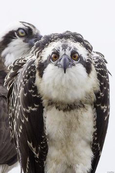 """Ospreys * * """" Double standard. A guy kin sleep around,but a woman makes 19 or 20 mistakes and she's a tramp."""""""