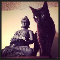 #cats #blackcats #goodluck