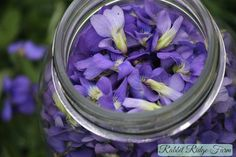 Foraging: Violets Plus a Violet Syrup Recipe