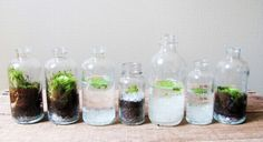 glas flaschen designer terrarium mini garten