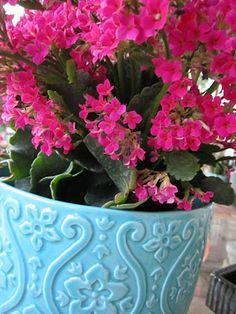 Inspire Bohemia - hot pink flowers on my Kalanchoe plant :)