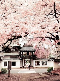 this photo is really pretty and the pink color looks really nice with the temple