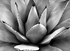 art for home.......Cacti in Black and White