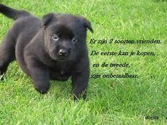 humoristische spreuken gezegden 95 beste afbeeldingen van Speciale band HOND   Cutest animals, Dog  humoristische spreuken gezegden