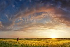Breath-taking sunset over field somewhere in the world....