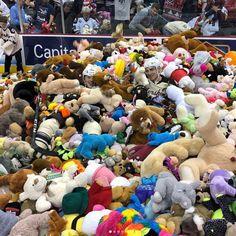 Hershey Bears Break Franchise Teddy Bear Toss Record The Bear Play, American Hockey League, Hershey Bears, Tossed, Teddy Bear, Seasons, Seasons Of The Year, Teddy Bears