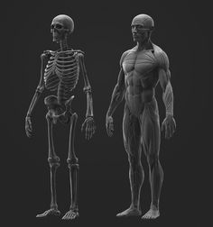 ArtStation - Anatomy Study, Joe Zheng