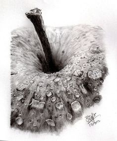 Pencil sketch of an apple by ~chaseroflight on deviantART