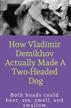 When Soviet Scientists Literally Created A Two-Headed Dog Surreal Photos, Scientists, Mad, Dogs, How To Make, Movie Posters, Animals, Animales, Animaux