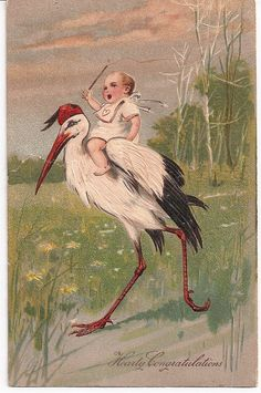 Baby Arrives on Stork ~ 1909 Antique Postcard