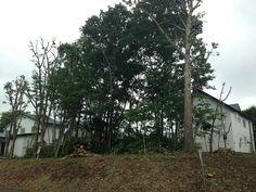 info14 伐採終了:十字路から撮影