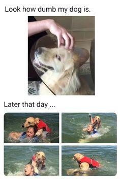 Revenge of the dog