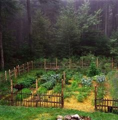 I love the rustic look/design of this fenced vegetable garden