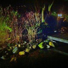 night falls on paradise garden. #Padgram