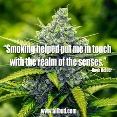 """Smoking helped put me in touch with the realm of the senses."" -Hugh Hefner #allbud #marijuana #cannabis #weed #quotes #smoking #medical #medicalmarijuana #legalization #legalizemarijuana #use #enjoy"