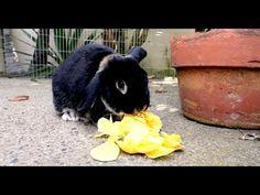 Backwards Rabbit - Parry Gripp - YouTube