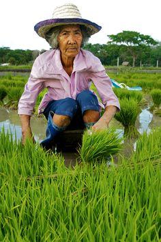 Portrait of an Old Woman working in Rice Fields - Philippines, Bagabag | par Daniel Peckham