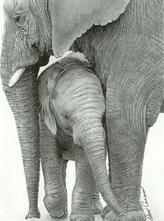 http://images.fineartamerica.com/images-medium/mother-elephant-and-baby-dean-cannon.jpg