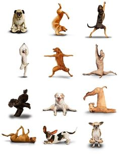 Yoga Dogs by colleen.libby.12