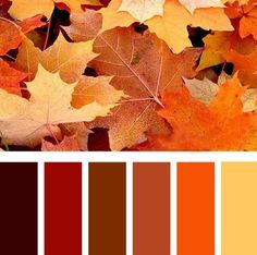 modern interior colors-Fall leaves inspired bright orange color scheme
