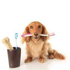 piensopet-como-lavar-los-dientes-a-tu-perro