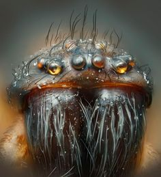 House spider, magnified 30 times, with an advanced case of Movember.
