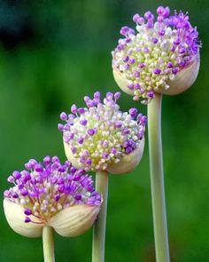 Purple | Roxo | Lilás, só um pouquinho...