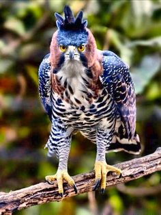That's one serious looking hawk.