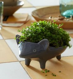 Ceramic Animal Planters! Porcupine /Hedgehog planter.