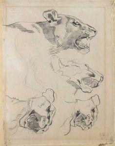eugene delacroix (1796 1863) etude de têtes de lionne