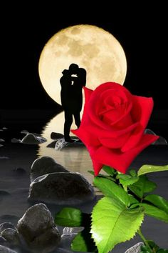Wall paper celular flores negras Ideas for 2019 Beautiful Love Pictures, Love You Images, Romantic Pictures, Beautiful Moon, Beautiful Roses, Rose Images, Flower Images, Benfica Wallpaper, Love Cartoon Couple