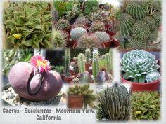jardineria utilisima - Buscar con Google